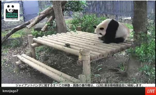 pandas do zoológico de Ueno