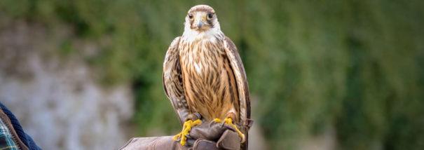 Anixter Axis Evolution National Bird of Prey