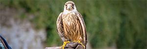 Anixter y Axis ayudan a 'vigilar' el vuelo de las aves de presa en el Centro Nacional de Prey