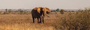Los detectores Redscan RLS-2020 de Optex ayudan a proteger los elefantes en Kenia