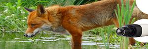 Wisenet 摄像机捕捉斯洛伐克 Vel'ké Fatra 自然公园的活动
